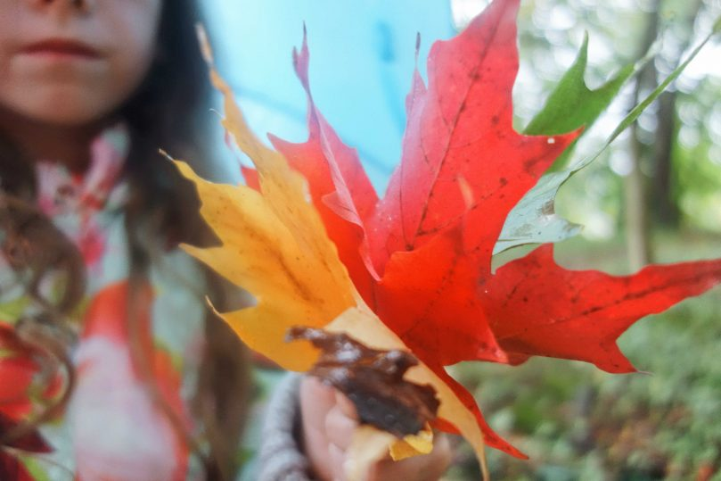 Meme holding colourful autumn leaves