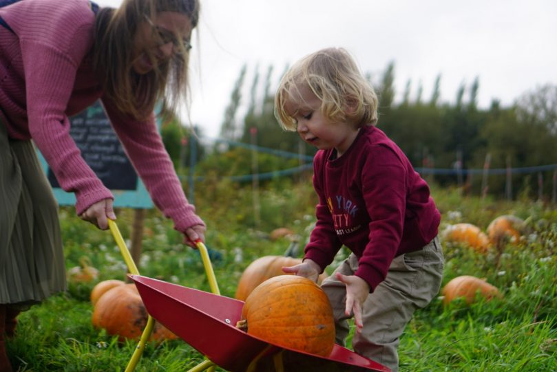 Pumpkin picking in the North West